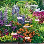 Фото 50: Пример цветов для клумбы