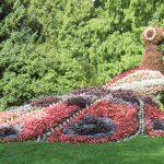 Фото 52: Цветник в форме птицы