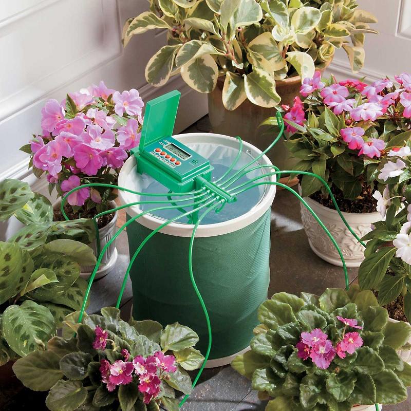 Полив комнатных цветов в домашних условиях