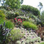 Фото 62: Оформление склона цветами