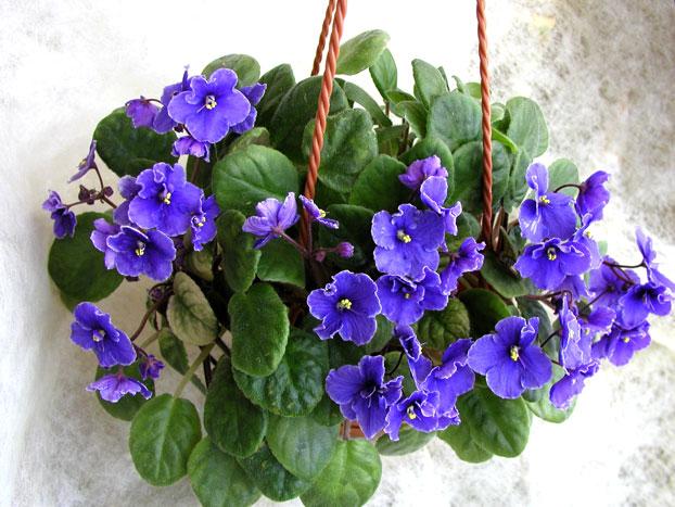 кашпо идеально подходит для цветка