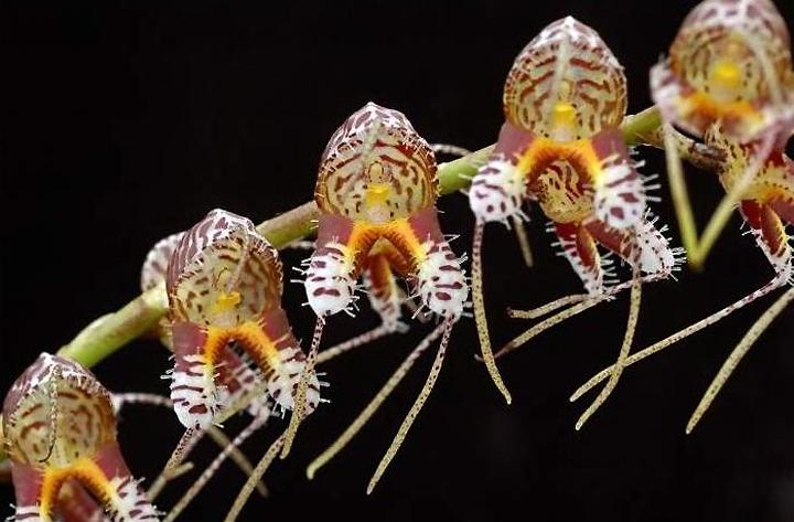 Литофитные орхидеи