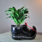 Фото 91: Выращивание драцены Джанет Креиг