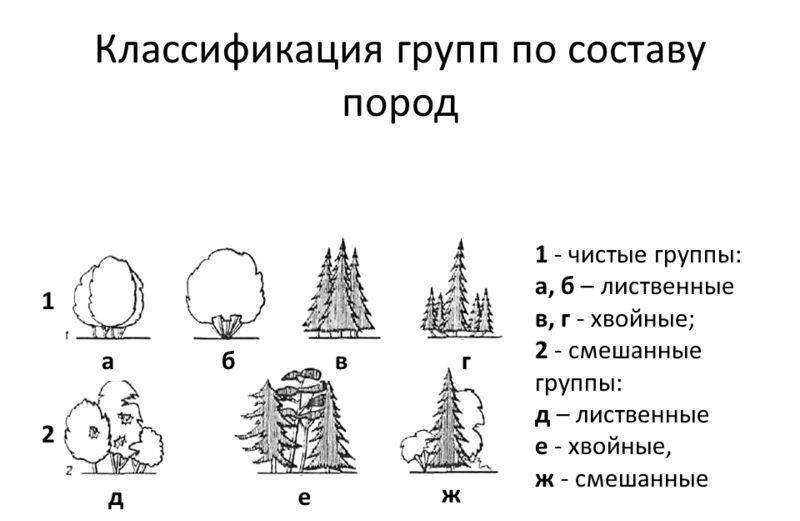 Классификация кустарников по составу пород