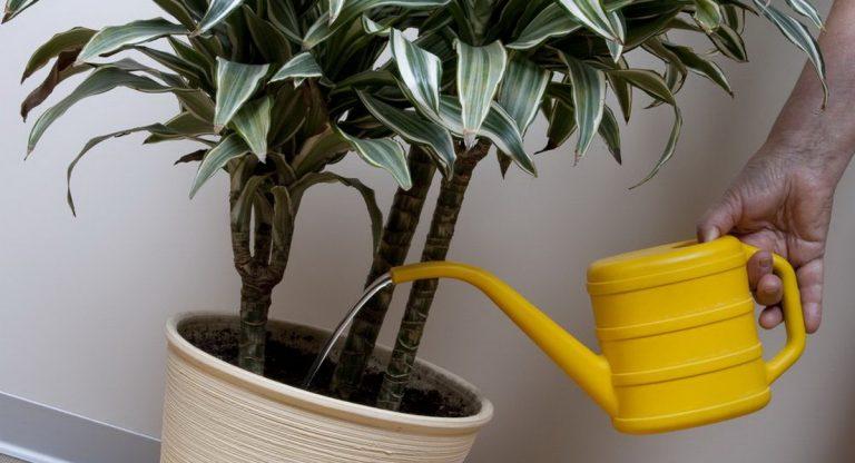 Чем поливать цветы в домашних условиях 902