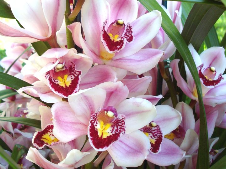 орхидея 14