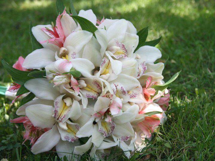 орхидея 16