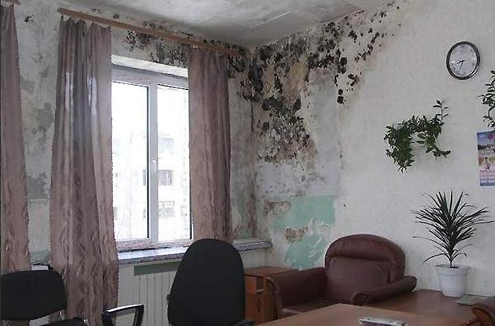 Комната с плесенью на стенах