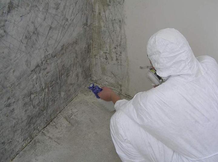 Обработка пораженной плесенью стены