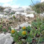 Фото 66: Среда произрастания Euphorbia capitulata