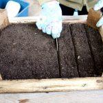 Фото 92: Борозды для посадки семян жимолости