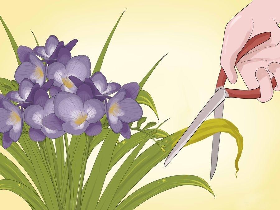 Обрезка засохших листьев в и цветов