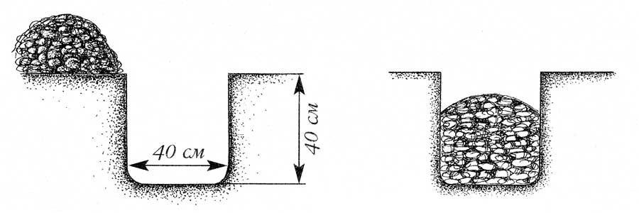 Размер лунки для посадки жимолости