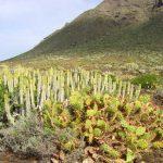 Фото 135: Рост молочая на солнечном месте в природе