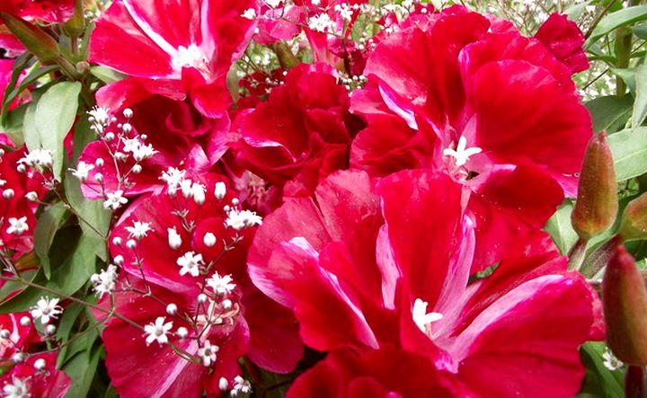 Роскошное цветение