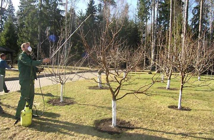 Меры предосторожности при обработке сада