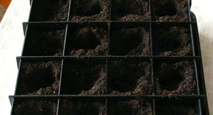 Подготовка земли и емкостей