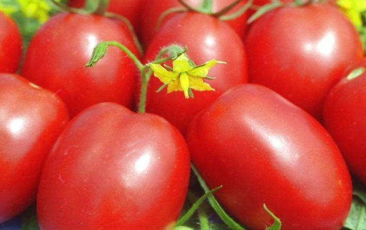 сорт де барао с красными плодам