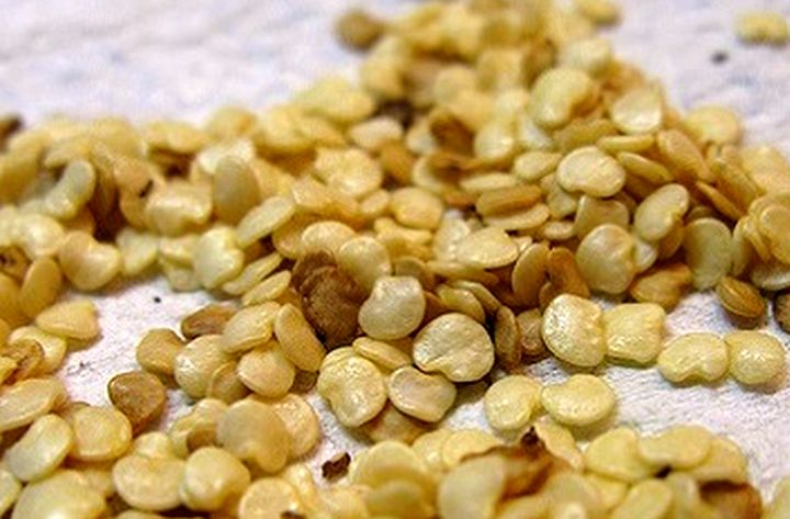 Выбраковка семян для посадки рассады