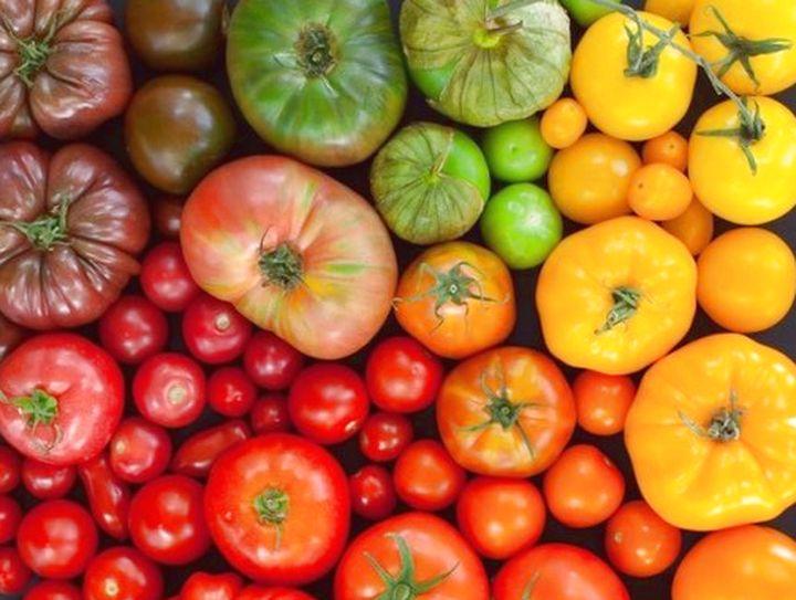 разноцветье сортов помидор