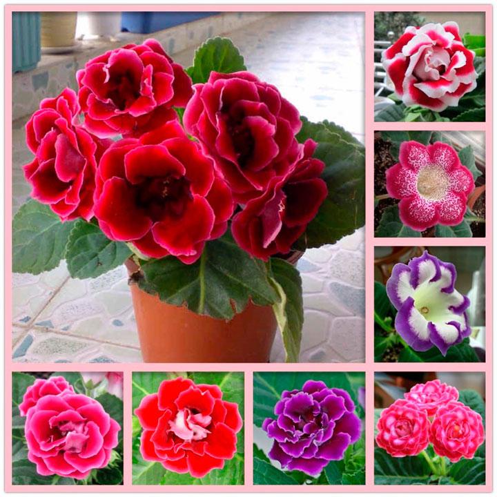 Варианты расцветки