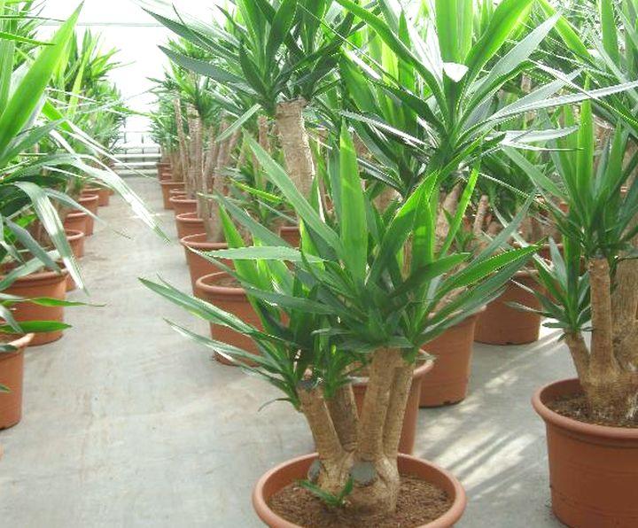 Великолепное растение для дома