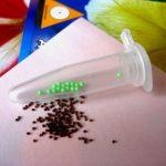 Фото 38: Дражированные семена петунии