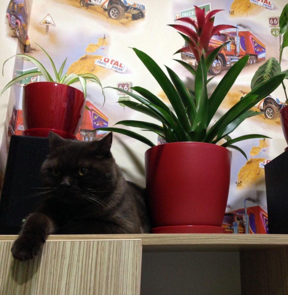 Выращивание гузмании в квартире