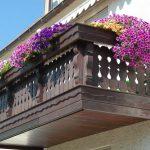 Фото 95: Выращивание петунии на балконе