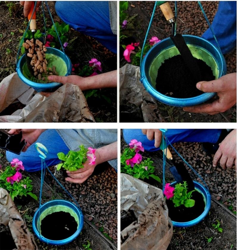Цветы петуния посадка и уход виды