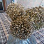 Фото 45: Соцветия лука - порея сорта Казимир
