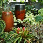 Фото 70: Сочетание гузмании с другими влаголюбивыми растениями