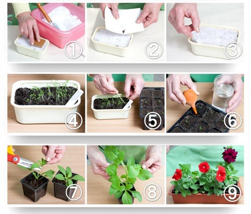 Как садить цветы на рассаду 70