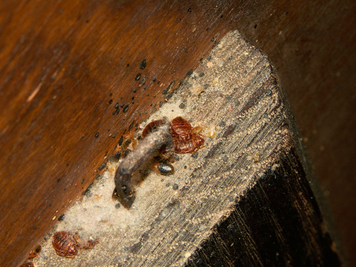 Скопление насекомых