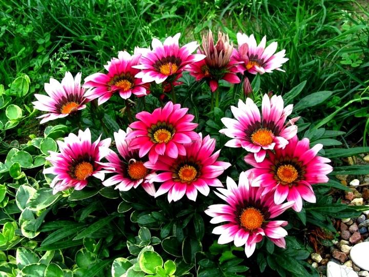 Выращивание однолетних и многолетних цветов 5872