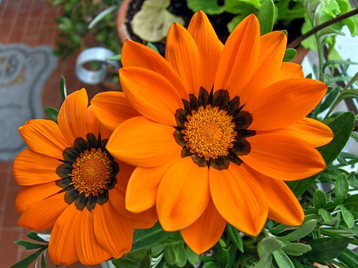 гацания цветы (2)