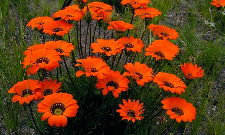 гацания цветы2