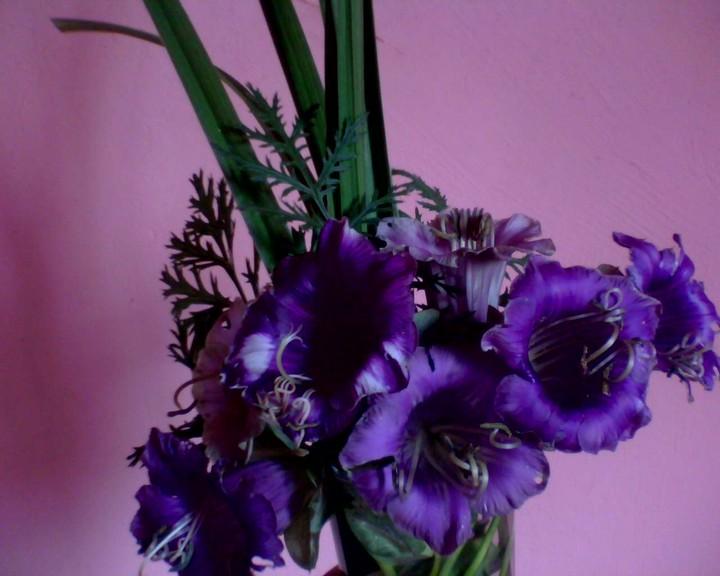 кобея фиолетовая (2)
