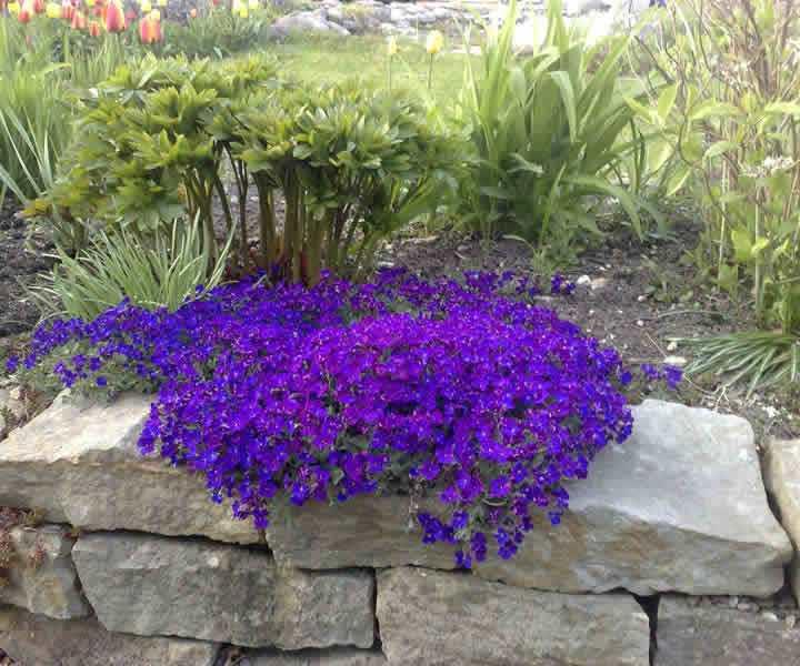 Как сажать почвопокровные цветы 88
