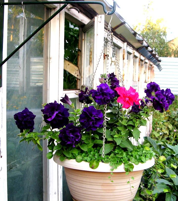 Как цветы сажать в подвесные кашпо на улице 763