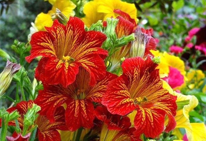 Цветы восхитительной раскраски