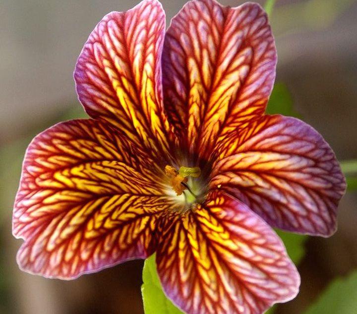 Украшение любого цветника