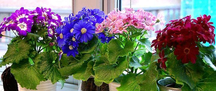 Цветочный хоровод на подоконнике
