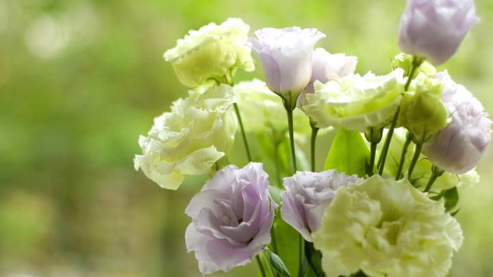 Эустома - красивое растение для сада