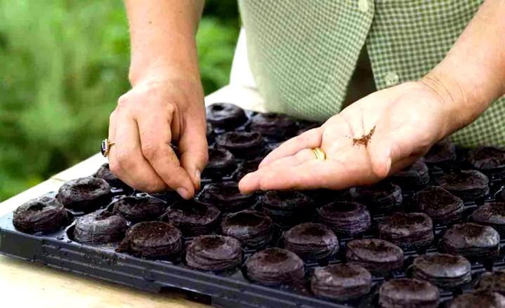 Как выращивать рассаду в торфяных таблетках