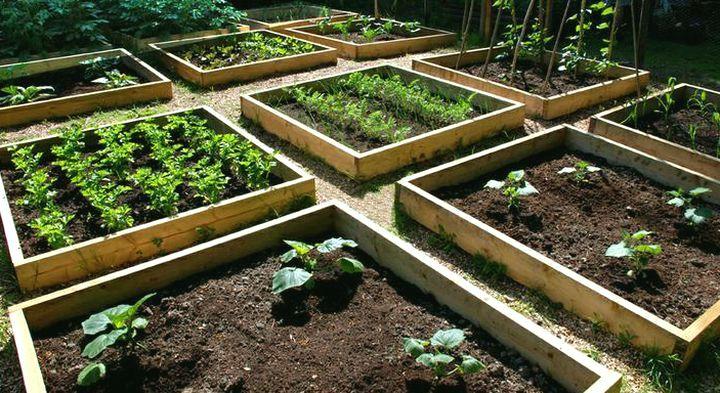 Огород обустроенный грядками для ленивых