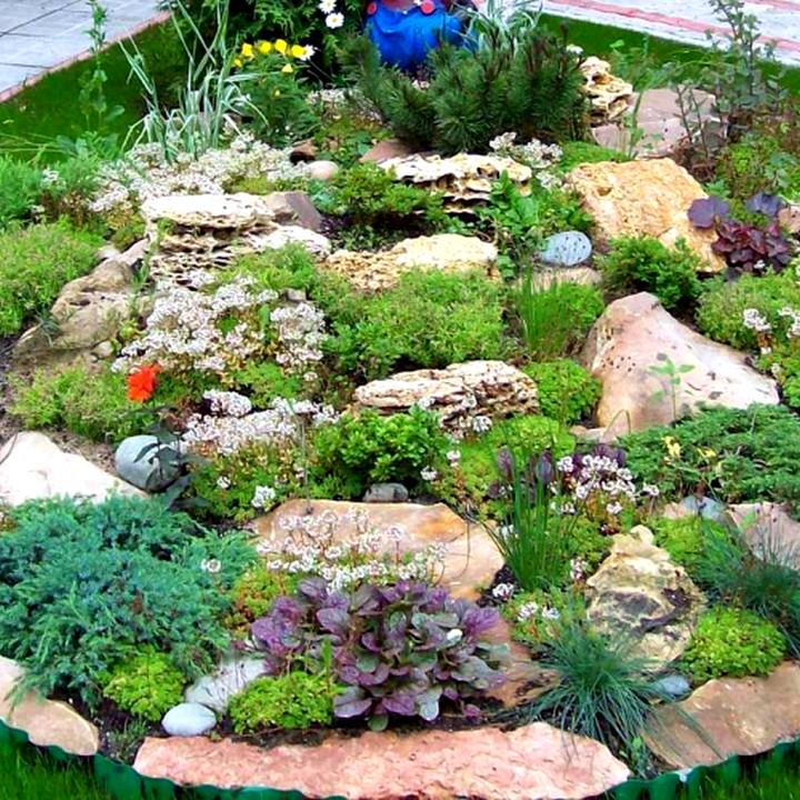 растения для альпийской горки4