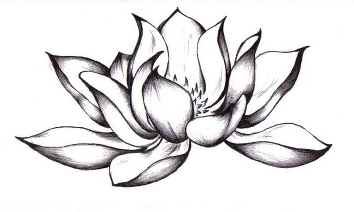 Лилия нарисованная карандашом