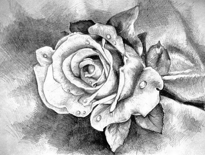 Роза нарисованная карандашом