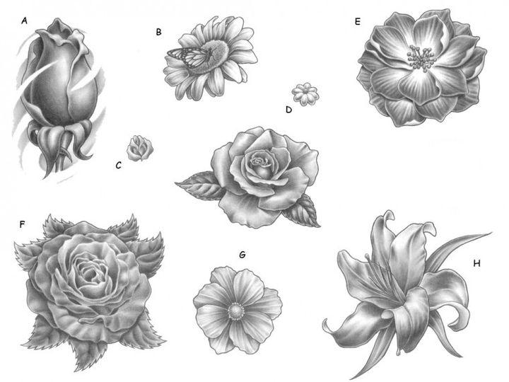 Различные цветы нарисованные карандашом